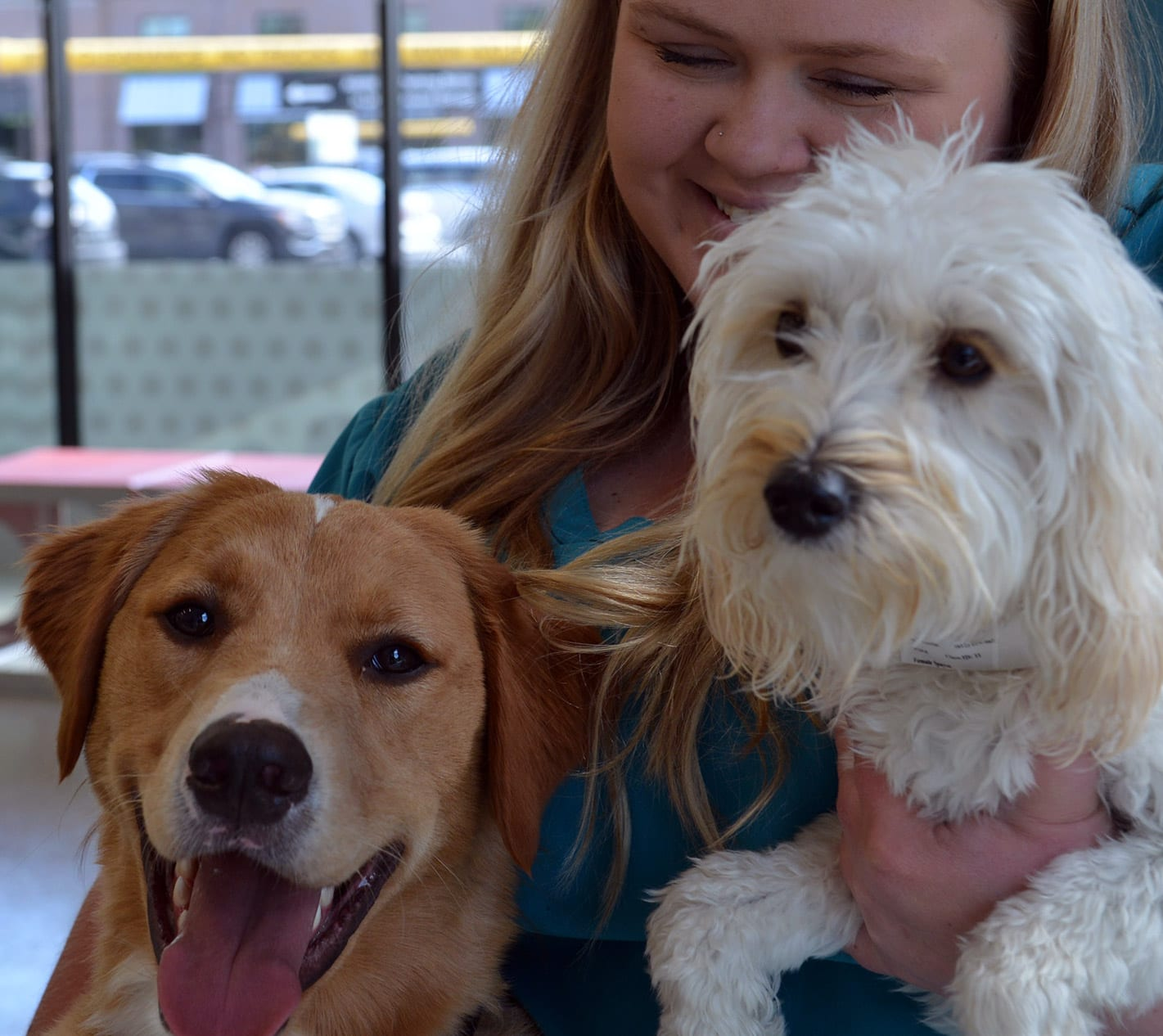 Two dogs being brought to WellHaven Pet Clinic
